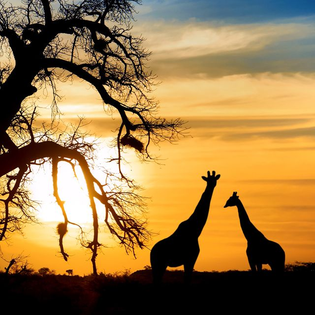 With Epic Landscapes, Unmatched Biodiversity And A Vibrant