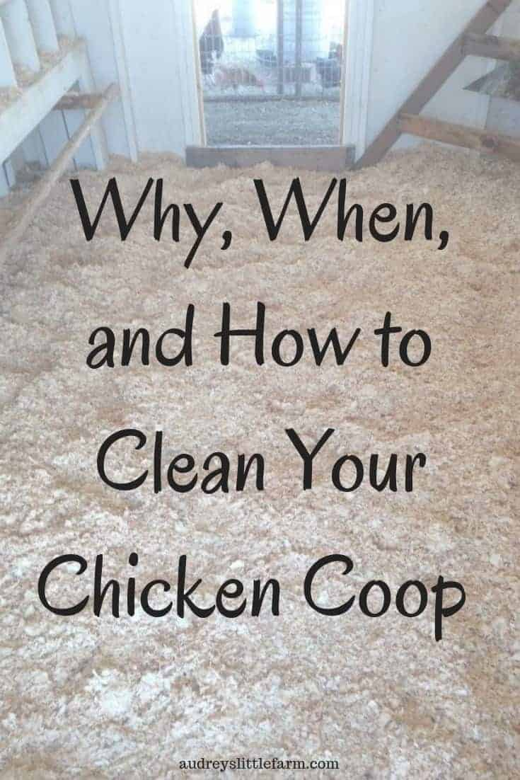 Clean your chicken coop now for the benefit of your chickens. Learn how easily you can do it and why it is important for your chickens health. #audreyslittlefarm #backyardchickens #raisingchickens #chickencoop