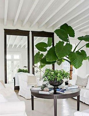 White Living Room With Great Green Plants Living Rooms