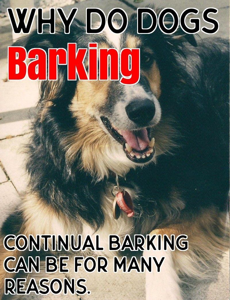 Why Dogs Barking Dog Barking Dogs Dog Training