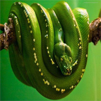 Kostenlose Wallpaper Zum Runterladen Verruckte Tiere Tier Wallpaper Schlangenbilder