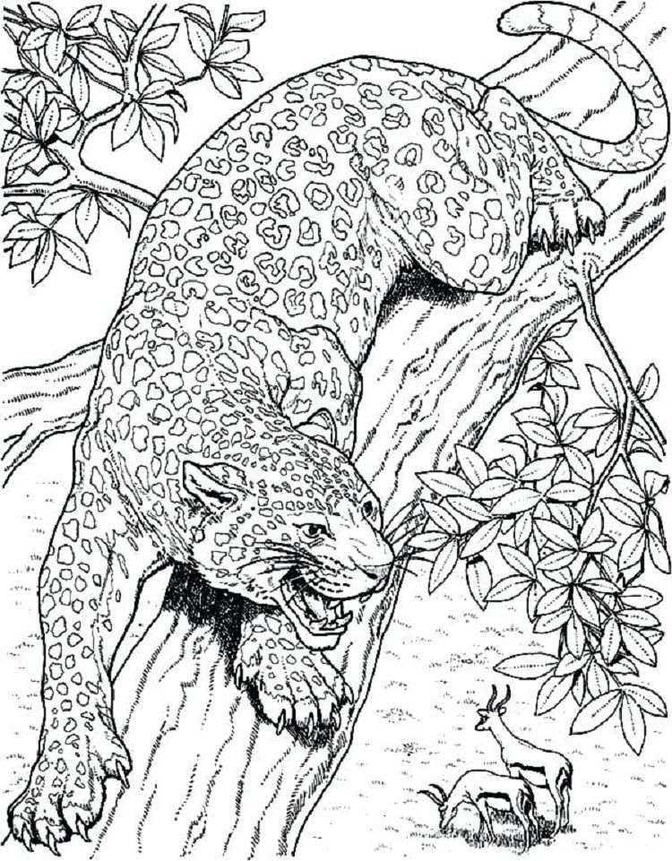 Realistic Jaguar Coloring Pages Deer Coloring Pages Cat Coloring Page Pencil Drawings Of Animals