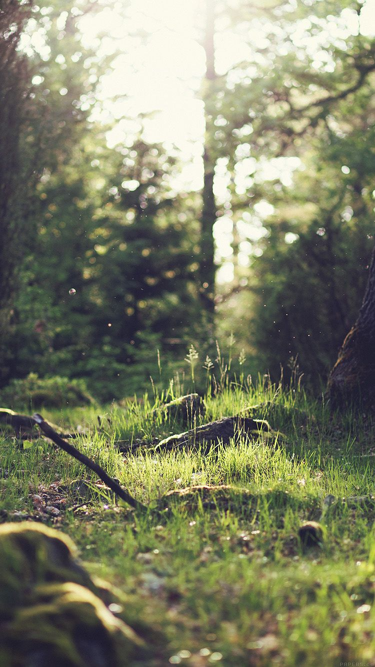 Iphone wallpaper tumblr nature - Free Stock Photo Of Wood Nature Sunny Forest