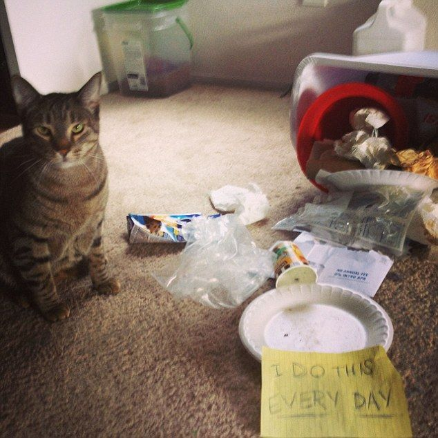 Pet owners have taken to the internet to shame their pet cats and showcase their guilty be...