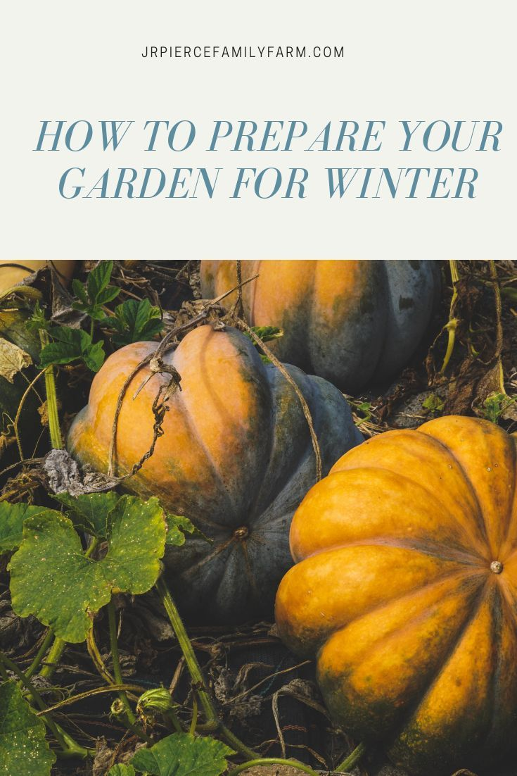 The Fall Gardening Chores You Need to Do Now Autumn