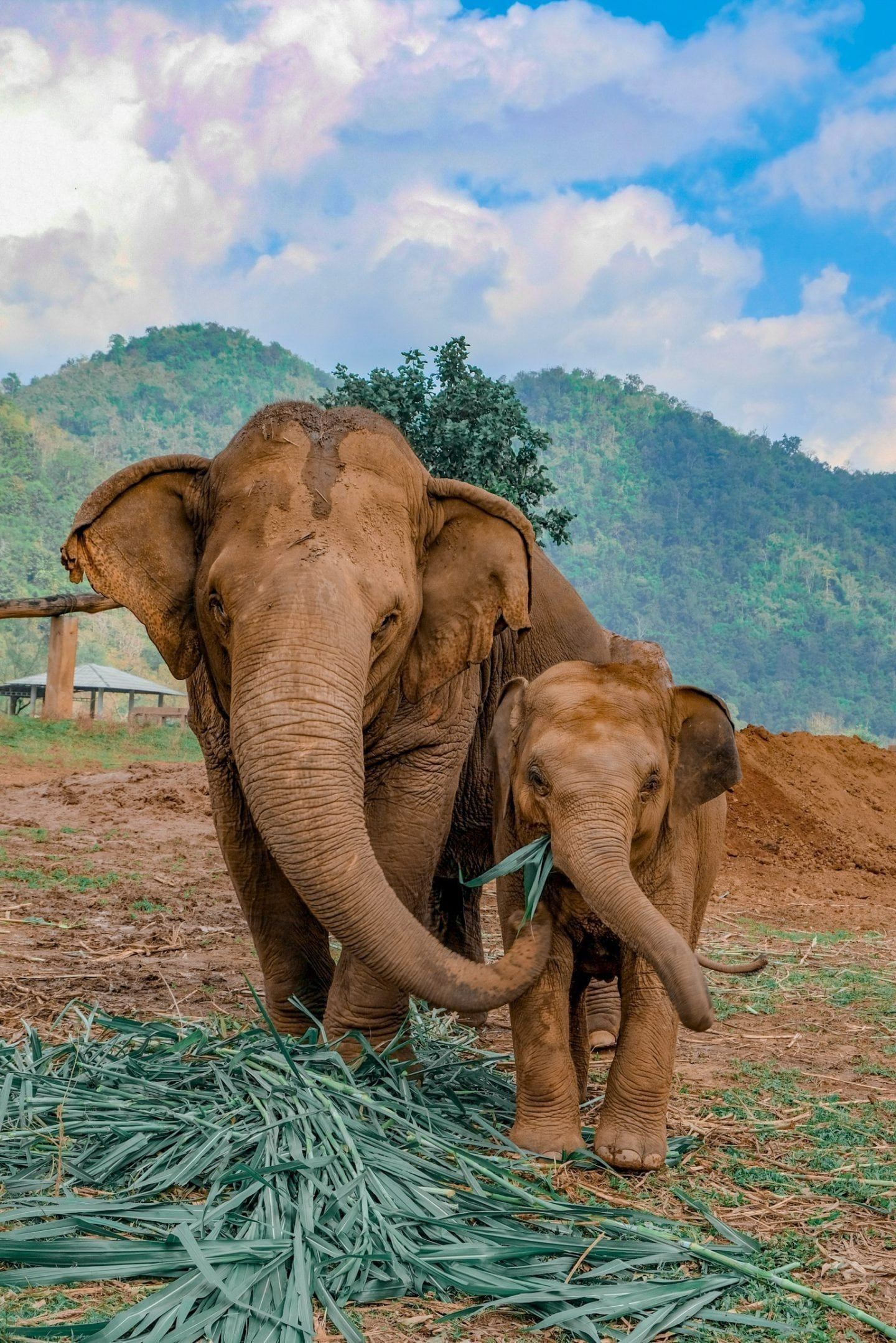 Visiter le parc naturel des éléphants à Chiang Mai – #Chiang #Elephant #Mai #natur #nat …