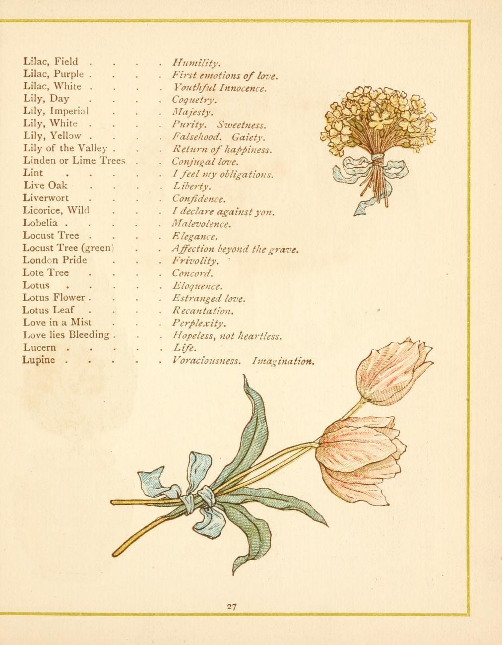Language Of Flowers Drawing Flowers Flowers Language Of