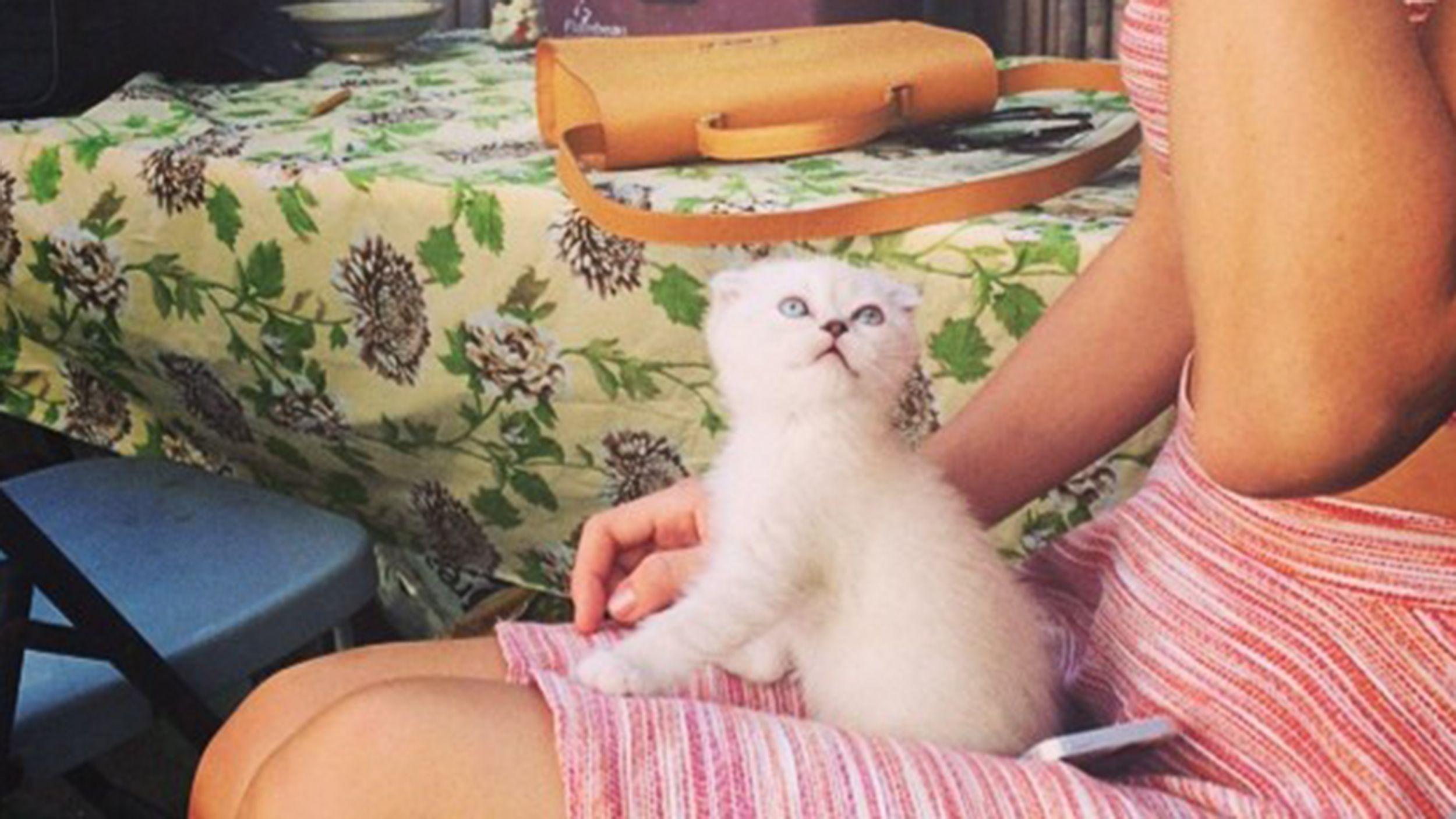 Taylor Swift Names New Kitten After Mariska Hargitay S Svu Character Cutest Kittens Ever Why Do Cats Purr Mariska Hargitay