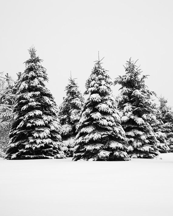 Items similar to Winter Landscape Photography - Black and White Photography - Extra Large Tree Wall Art - Winter Rustic Art Prints - Ski Lodge Decor on Etsy
