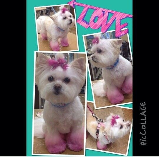 Petsmart Pet Expressions Pink Dog Dog Grooming Yorkie