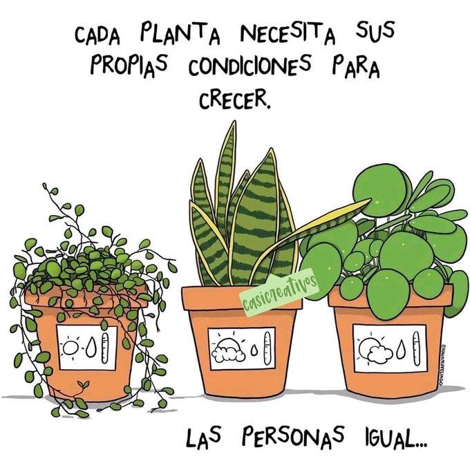 Dr. Alberto Blázquez (@Dr_Blazquez) / Twitter | Frases de cactus, Regalar plantas, Plantas
