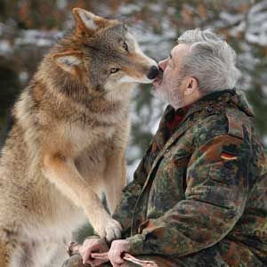 Wolf Germany werner freund s wolf sanctuary in saarland germany is shown in