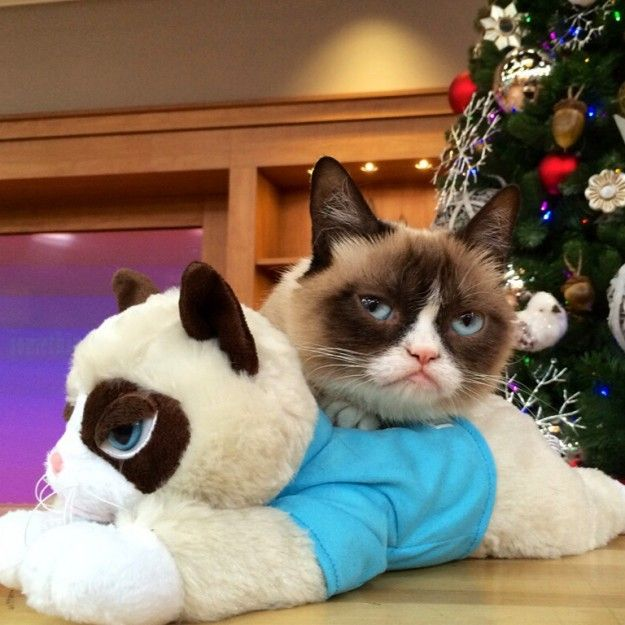 Christmas In July Cat Meme.Grumpy Cat Takes Over Qvc S Christmas In July Grumpy Cat