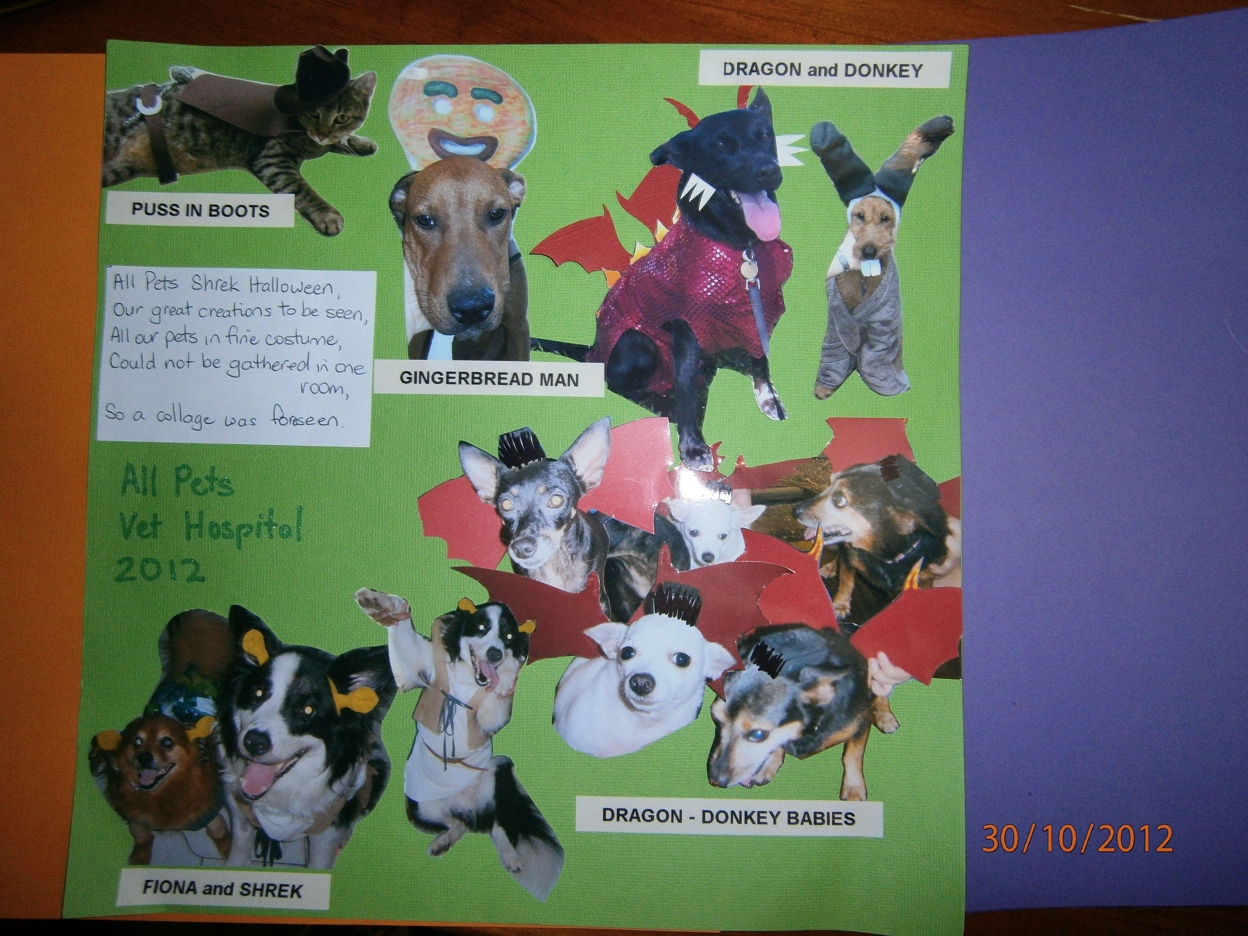 All pets vet nt pet vet pet insurance for dogs pets