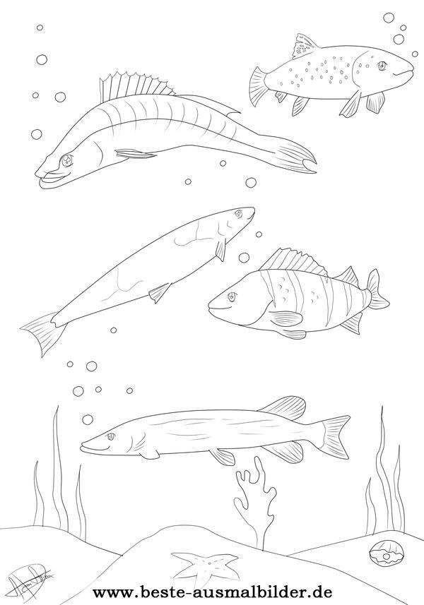 Ausmalbild Fische Jpg 600 857 Ausmalbilder Fische Ausmalen Fisch Zeichnung