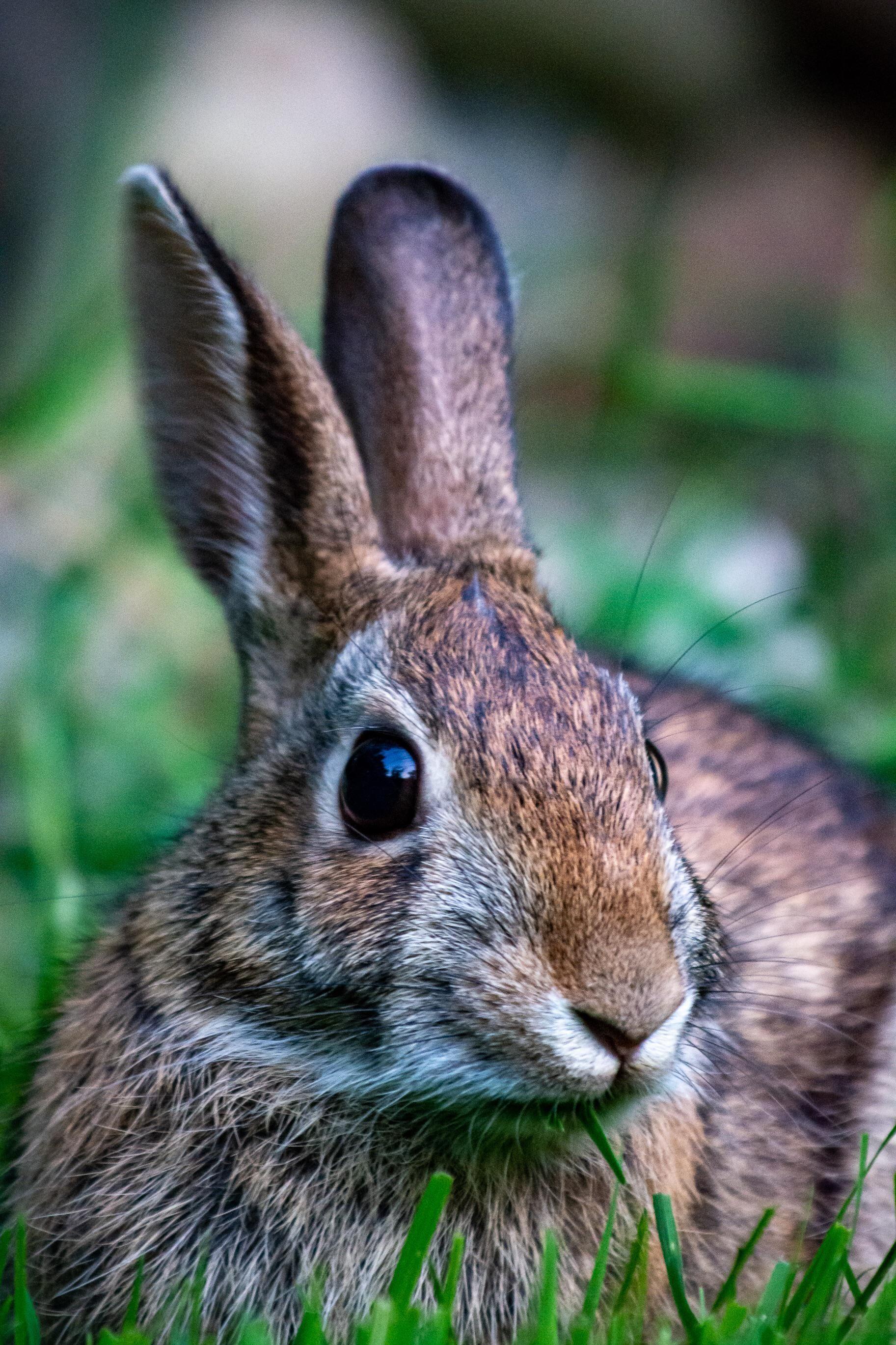 My backyard rabbit #animals #nature #photography in 2020 ...