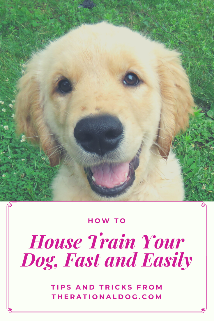 How To Potty Train Your Puppy In 2020 Dog Remedies Dog Allergies Remedies Natural Allergy Relief