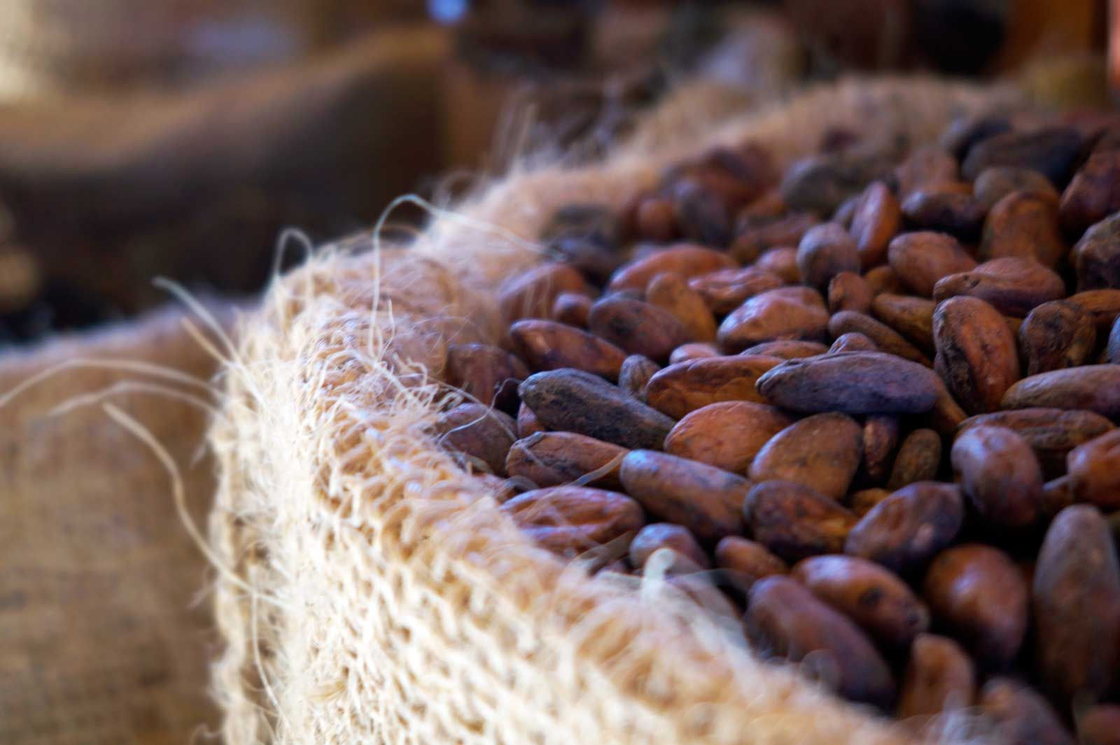 Health: The Mighty Cacao Bean Read all about the amazing health benefits of our beloved cacao and CHOCOLATE!