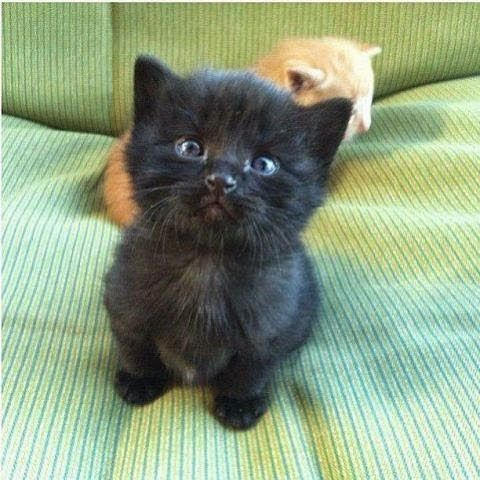 Look at that face! #yesfor #animals #cat