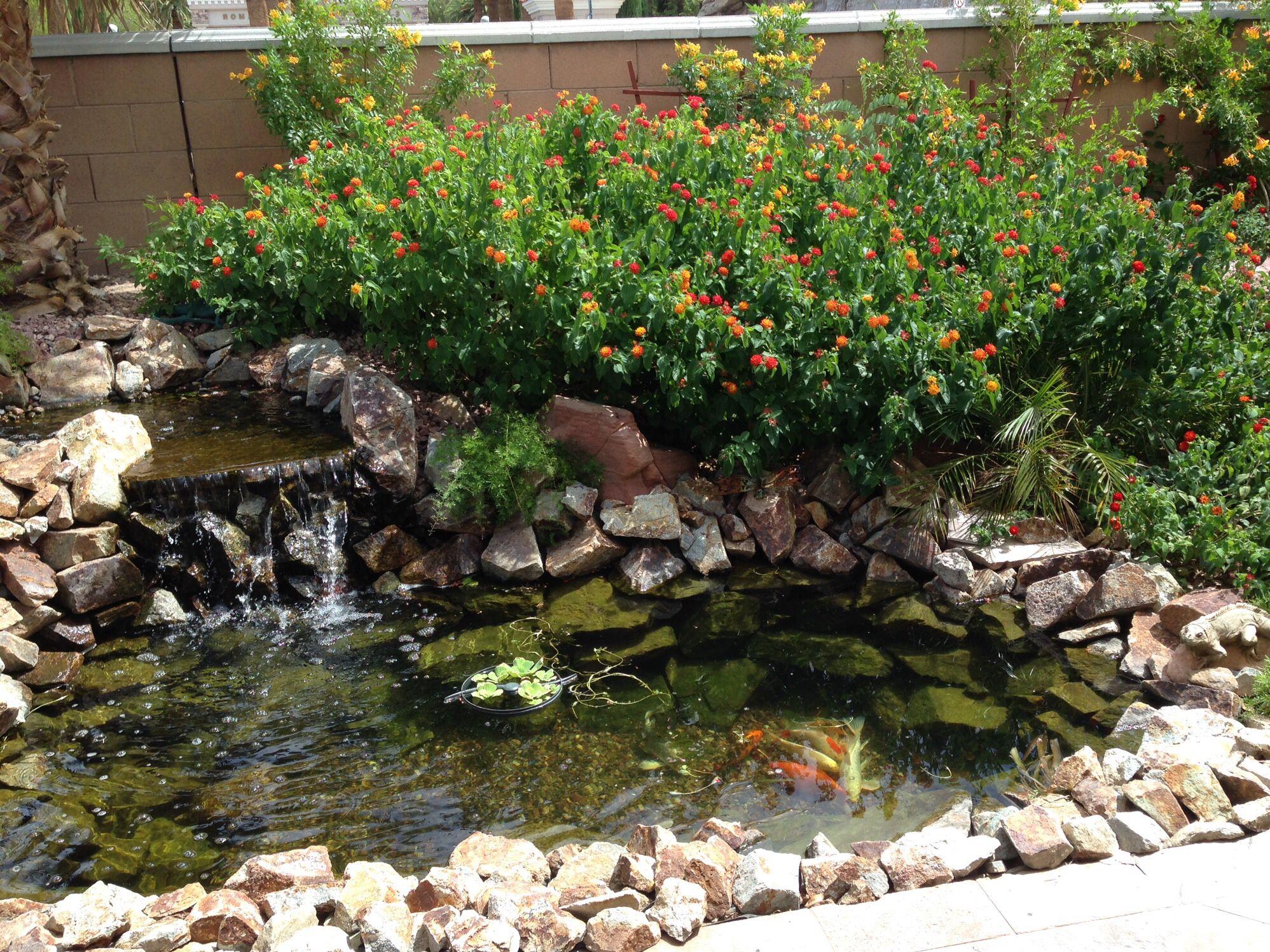 My backyard pond-Las Vegas, Nevada  Ponds backyard, Water garden