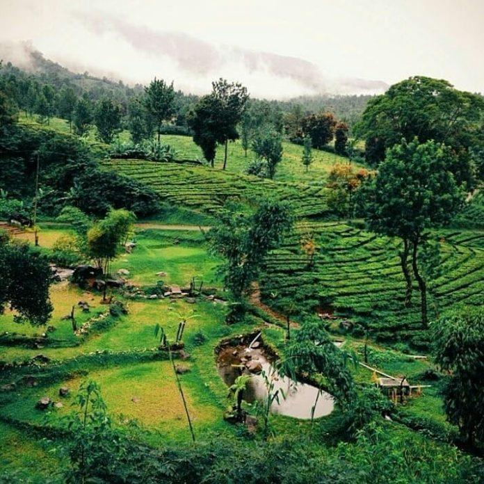 Tempat Wisata Di Bogor Yang Instagramable Di 2020 Tempat Kota Liburan