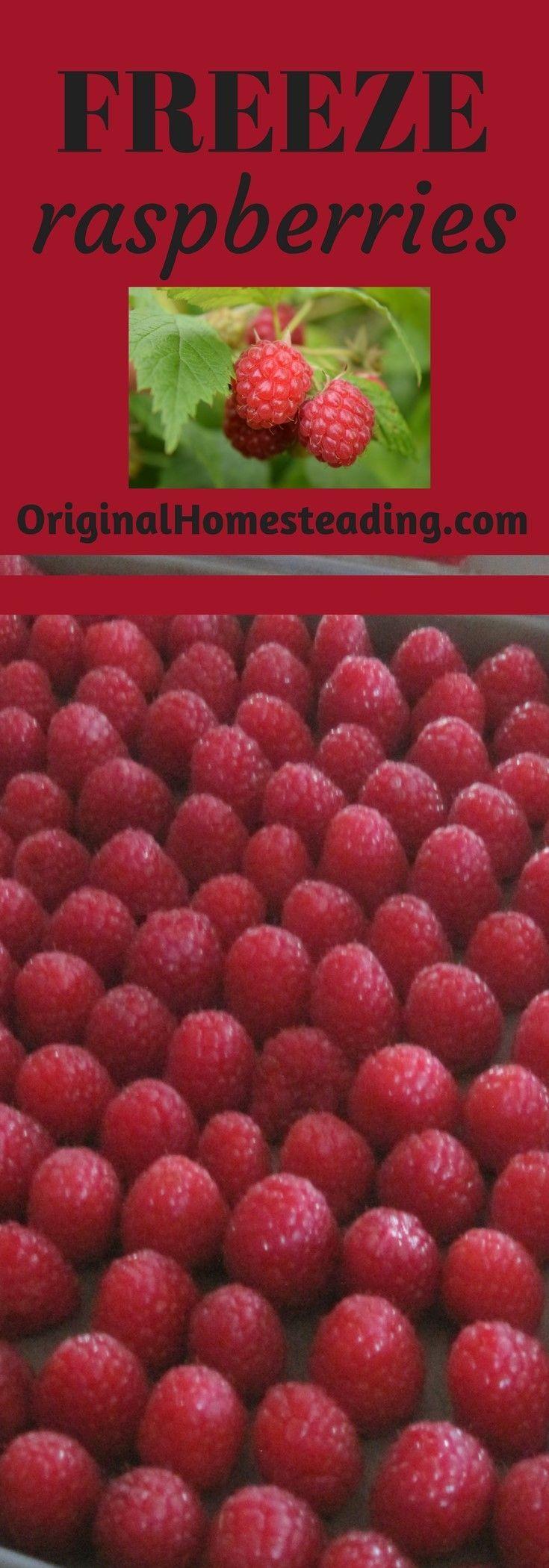 Freezing raspberries easy way to freeze berries