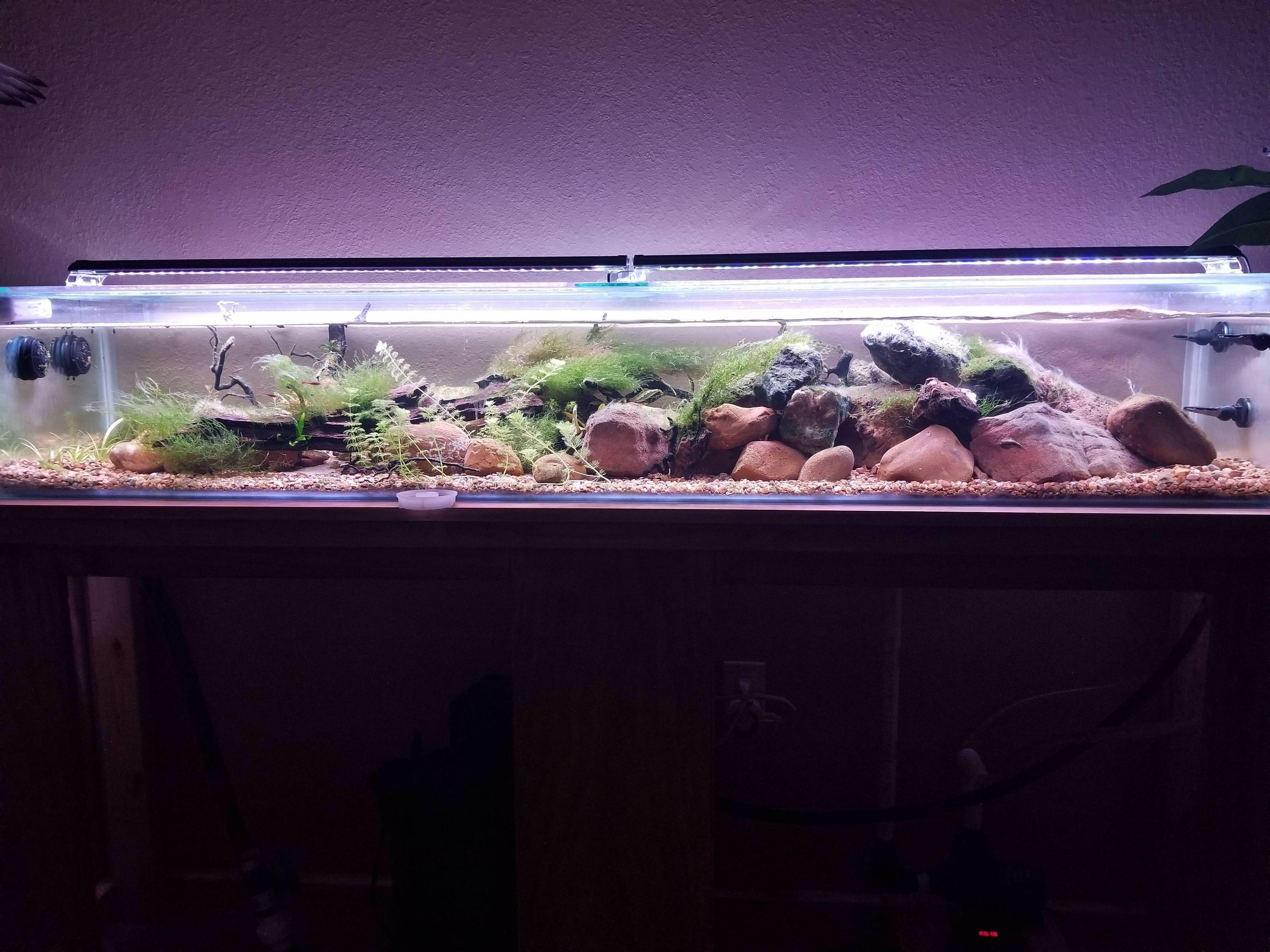 Izykmrjg aquarium pinterest aquariums vivarium