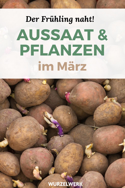 Aussaat & Pflanzen im März + Beispiel-Pflanzplan