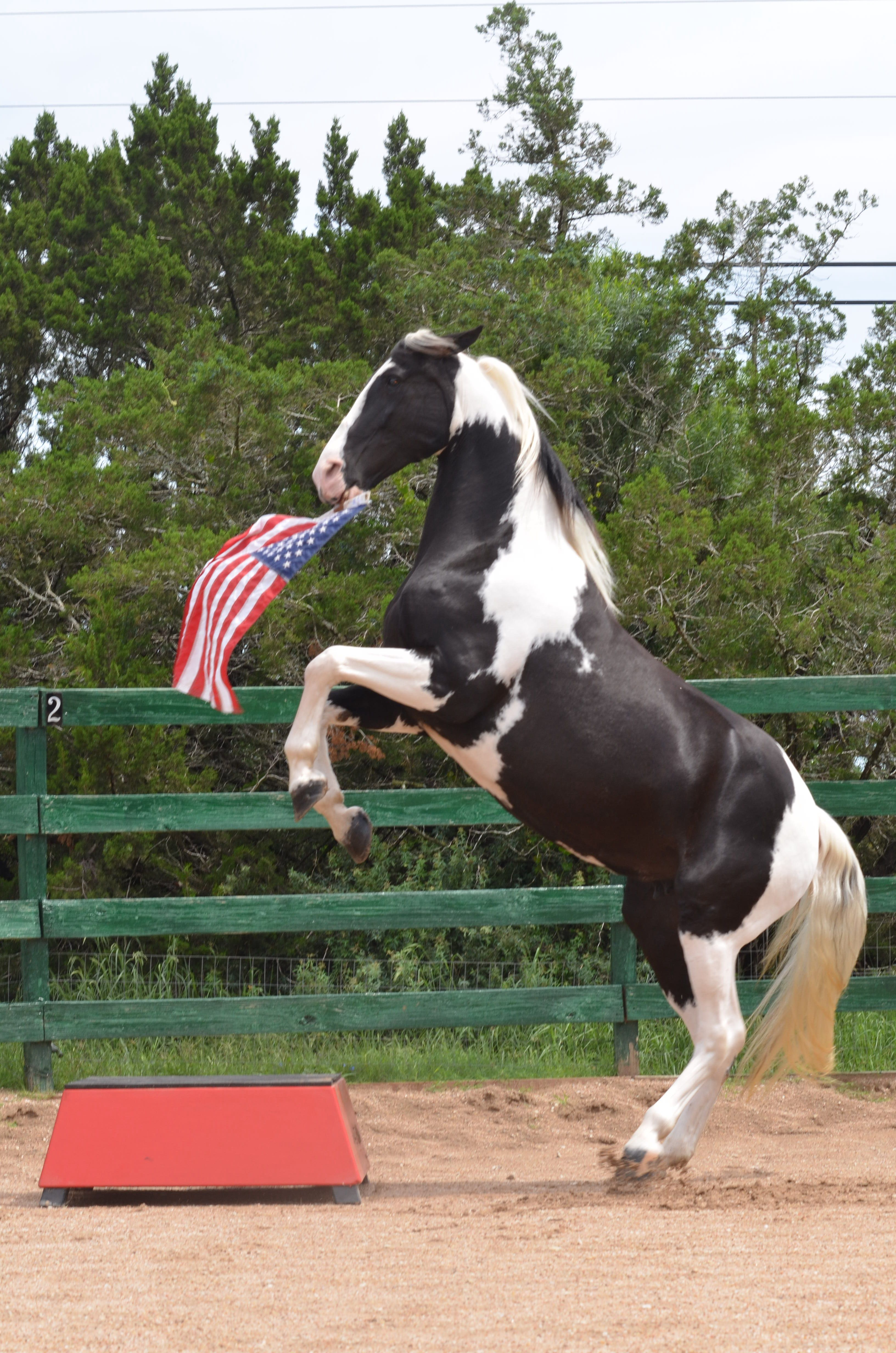 "Lady C ""Rockin the Stars and Stripes"" Horse training"