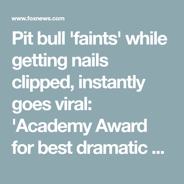 Pit bull 'faints' while getting nails clipped, instantly goes viral: 'Academy Award for best dramatic perfo... #academyaward