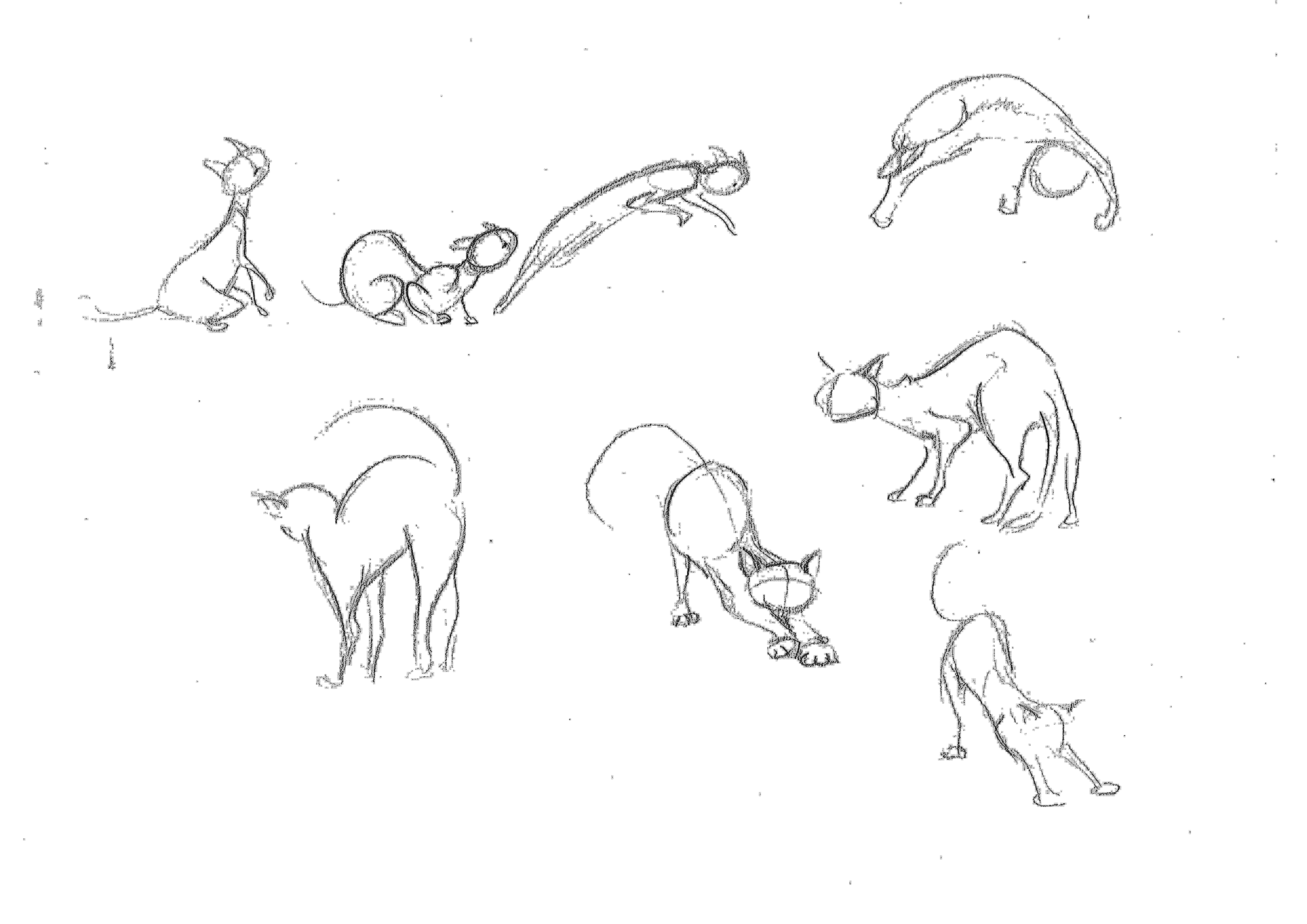 Cat Line Drawing Google Search Art Ideas Tutorials And Lessons