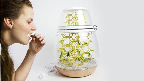 edible grasshopper grower