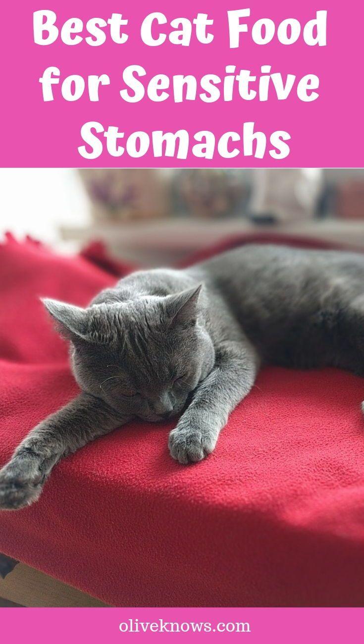 Best Cat Food for Sensitive Stomachs Your Cat Needs Cat