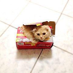 cat (☆o☆)