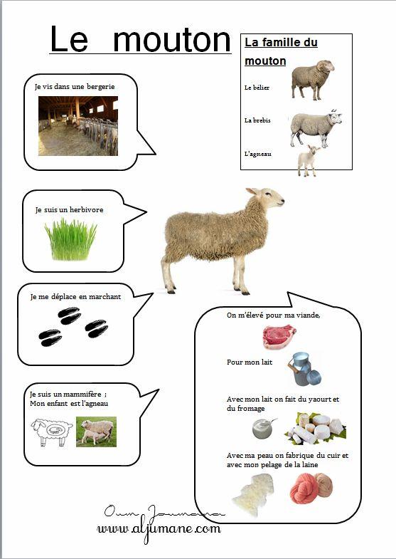 le mouton carte d 39 identit fiche p dagogique animaux pinterest le mouton mouton et identit. Black Bedroom Furniture Sets. Home Design Ideas