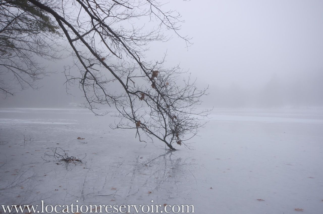 I walk past this tree on the north side of Puffers Pond almost every day and I've been waiting for the right moment to shoot it. The great fog invasion provided that extra something that finally made me stop.
