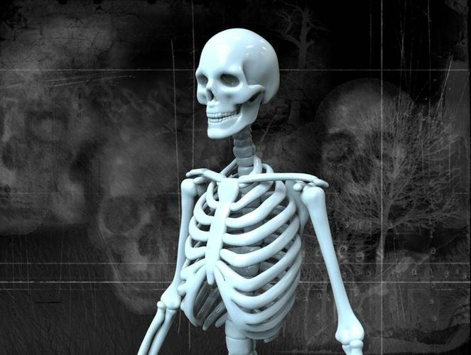 human skeleton – free 3d model ready for cg projects. available, Skeleton