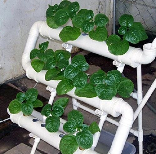 21Pc Net Cup Hydroponics System W/ Nutrient Film Technique ...