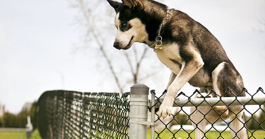 8 diy tips to keep your dog inside your fence the honest