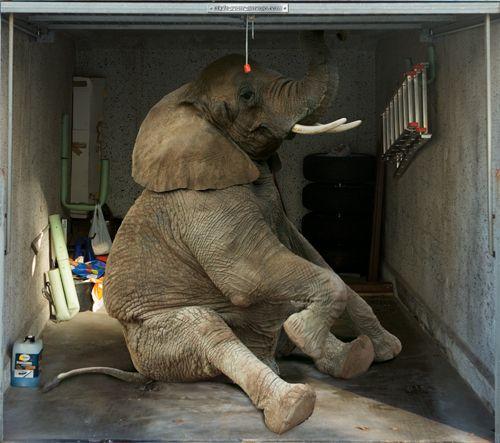 Fotoplane für Garagentor Elefant / Garage Mural Elefant
