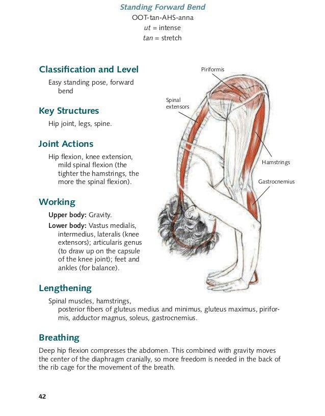 Excelente Hip Socket Anatomía Imagen - Anatomía de Las Imágenesdel ...