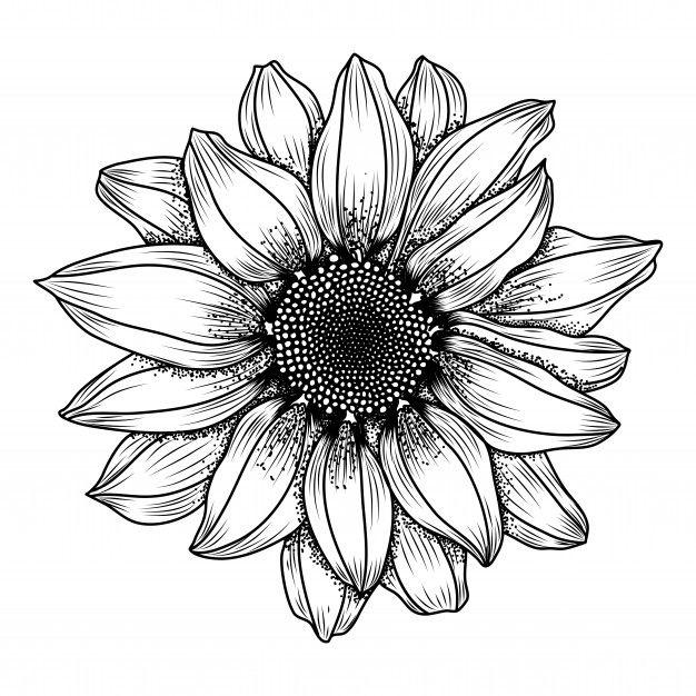 Hand-drawn Daisy Flower