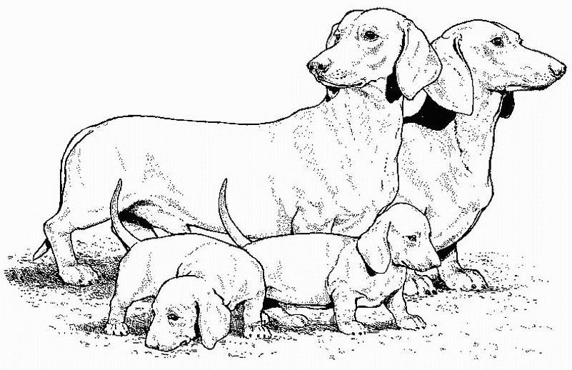 Dachshund Teenagers Coloring Pages Dog Coloring Page Horse
