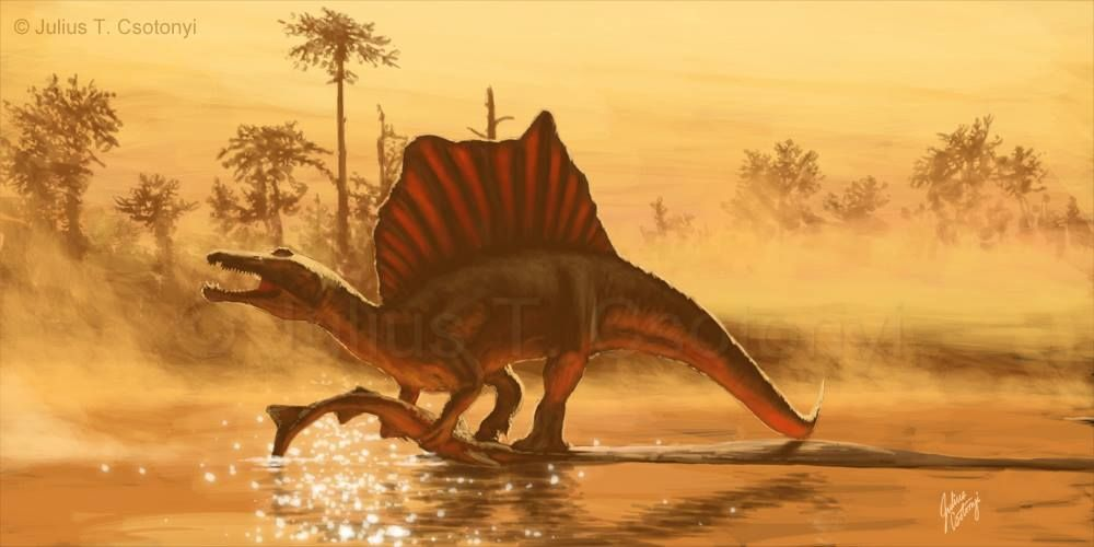 Julius Csotonyi   A quick sketch of one possible restoration of Spinosaurus, following the paper by Ibrahim et al. (2014) and the active discussion in response, as well as interesting blog posts by Andrea Cau, Scott Hartman and Jaime Headden. This restoration is still rough, and may eventually be completed as a full painting; as such, it is open to criticism and revision.