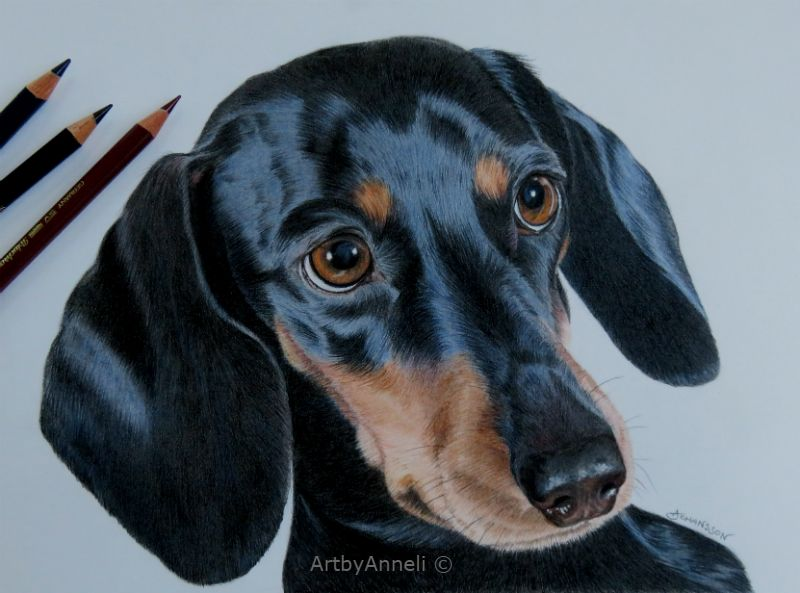 My Latest Dog Drawing Was A Fun Challenge To Capture The Shiny Fur Faber Castell Polychromos On 250 Animal Portraits Drawing Dog Drawing Cat Portraits