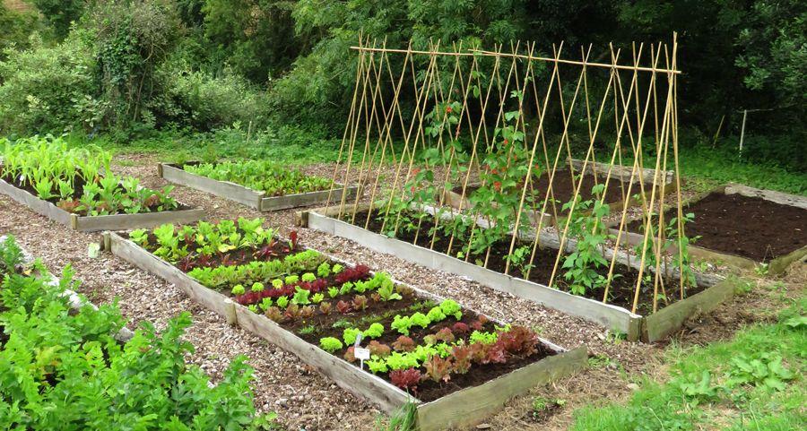 Related Image Vegetable Garden Planning Organic 400 x 300