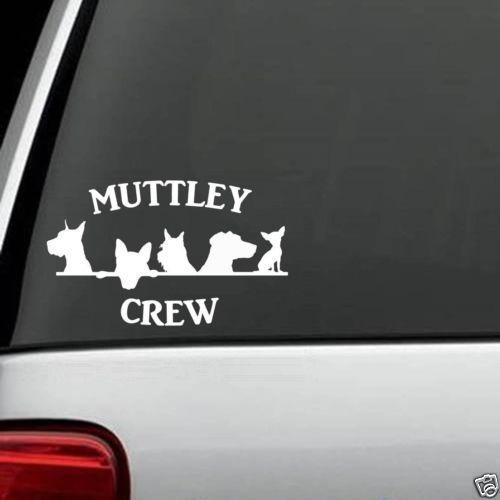 B1104 Mutt Crew Great Dane Yorkie Terrier Labrador Chihuahua Dog