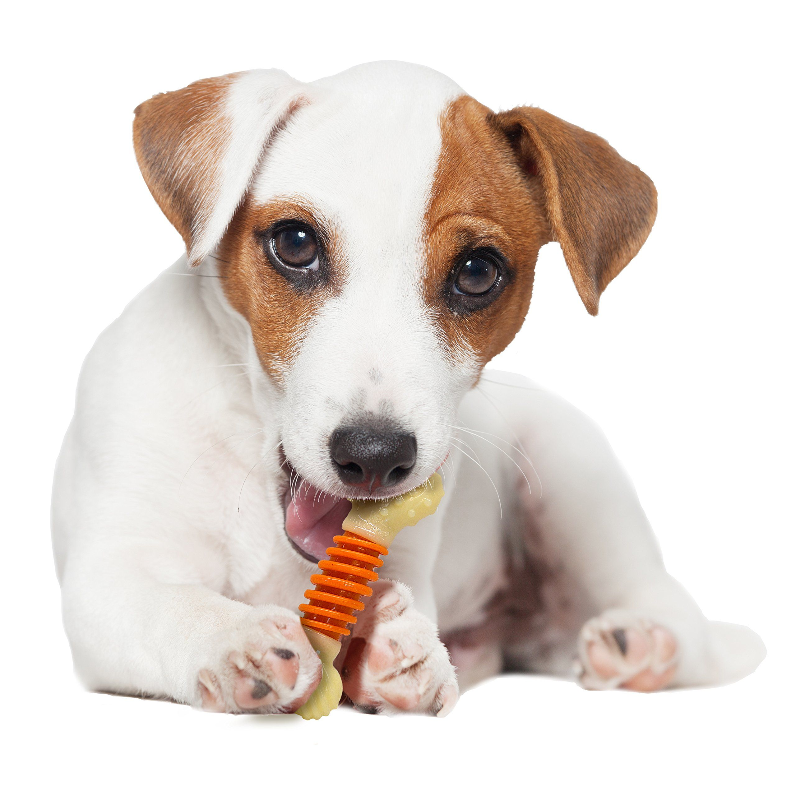 Nylabone Pro Action Dog Bone Dental Chew Toy Small Check Out