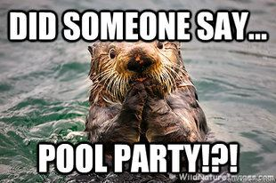 Pool Party Party Funny Pool Party Make Me Laugh