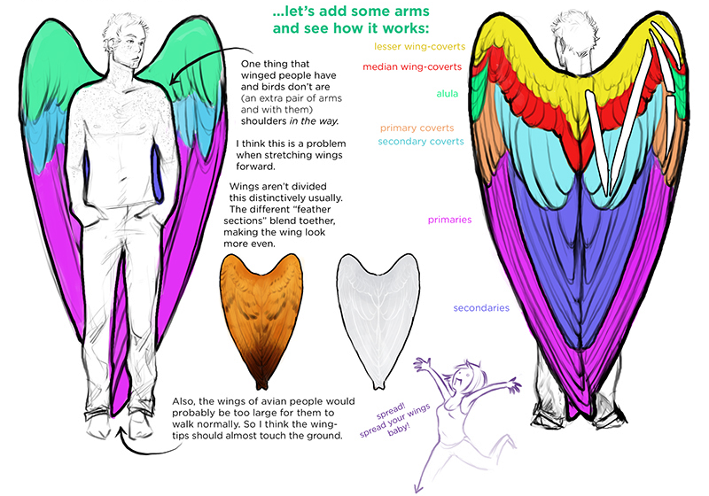 if humans had wings Just like birds, humans have to amplify their locomotion to get control  if the  wings were producing lift, the fabric would be tight, it would look.